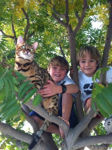 Bengal cat in tree with kids